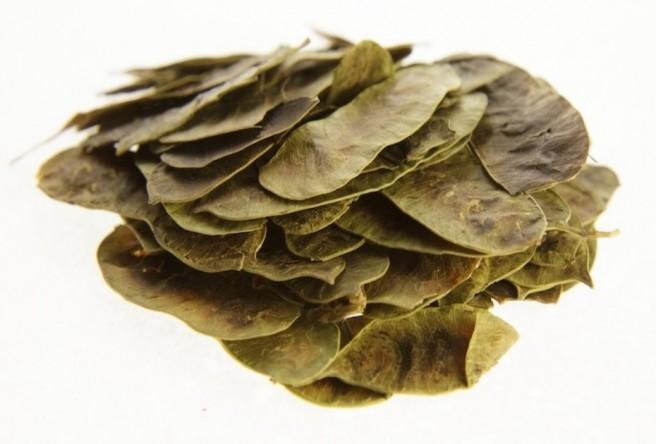 Φύλλα Αιγύπτου Σέννας Ινδιών